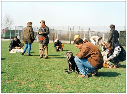 2e locatie Elzenhof puppyveld 1