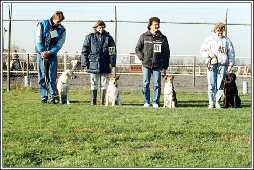 2e locatie Elzenhof puppyveld 6