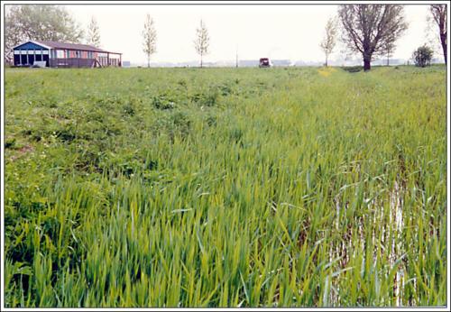 3e locatie AKC Rozenburg kantine 16