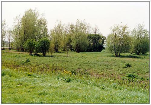 3e locatie AKC Rozenburg terrein 14