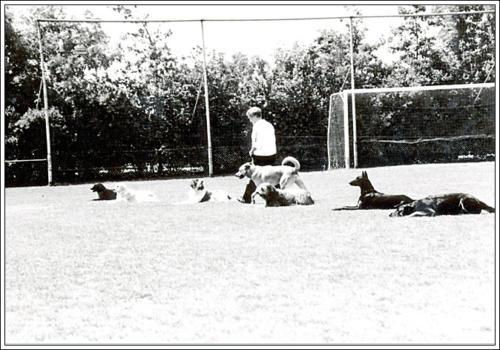 open dag AKC 1986 1