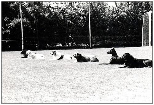 open dag AKC 1986 2