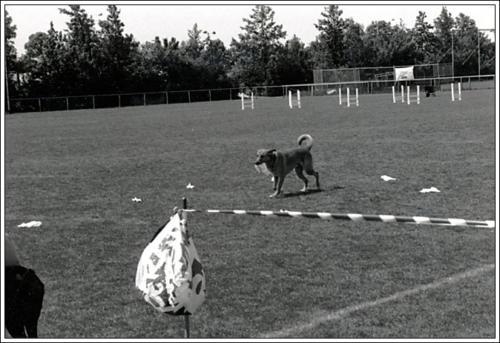 open dag AKC 1986 3