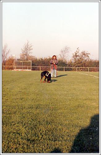 open dag AKC 1990 20
