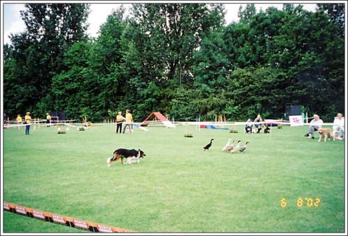 open dag AKC 2002 19