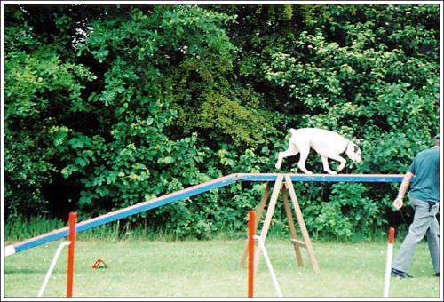open dag AKC 2002 35